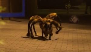 mutant_spider_dog_prank