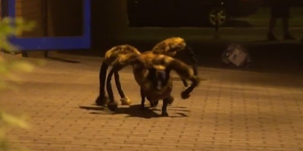 mutant_spider_dog_prank
